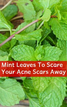 How To Use Mint Leaves To Scare Your Acne Scars Away. Mint leaves dry up acne and clean up pores. External application of mint leaves helps a great deal in fading the scars away. The best way to utilise mint leaves for treating acne scars is through a face pack.