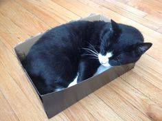 Sleeping in the box
