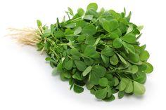 In Balance mit Bockshornklee - Bockshornklee – nie gehört? Dann wird es höchste Zeit, denn die Samen der krautigen Pflanze tragen eine enorme Fülle wertvoller Inhaltsstoffe in sich!