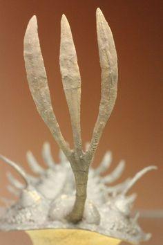 一体この角はなんだ!?超絶ワリセロプス・ロングフォーク/古生代デボン紀(4億1000万 -- 3億6700万年前)/本体最長部カーブ計測 約10cm (うちフォーク部分約4.5cm) / 母岩含め全体 8cm×6cm×6cm