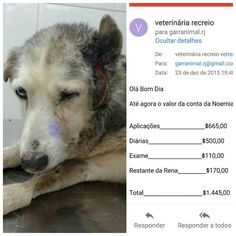 G.A.R.R.A. - Grupo de Ação, Resgate e Reabilitação Animal: Ajuda para a Vovó Noemia.