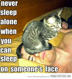 Funny Cat Pics with Captions - 60 the fanniest and the most hilarious pictures! Look other funny and hilarious gifs, videos & pictures of cute cats on site! Funny Animal Memes, Funny Animal Pictures, Cute Funny Animals, Funny Cute, Cute Cats, Funny Memes, Super Funny, Funny Photos, Memes Humor