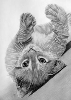 A rolling cat in graphite by mo62.deviantart.com on @deviantART