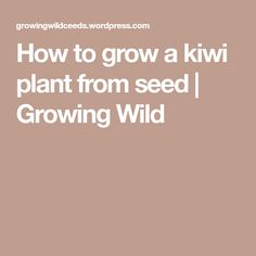 How to grow a kiwi plant from seed   Growing Wild