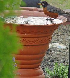 Birdbaths!