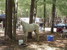 Over night camping with horses.  Are you prepared?