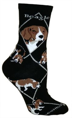 Are you interested in a Beagle? Well, the Beagle is one of the few popular dogs that will adapt much faster to any home. Whether you have a large family, p Art Beagle, Beagle Puppy, Corgi, Blue Merle, Pocket Beagle, Dog Socks, Novelty Socks, Puppy Eyes, Image Hd
