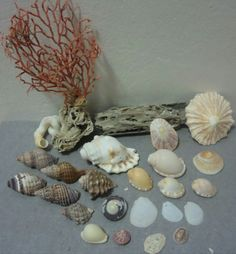 Buy Sea Shells & rare red grass from Jeffreys Bay (cleaned handpicked) for Red Grass, Coastal Art, Seashells, Cleaning, Crafts, Conch Shells, Manualidades, Sea Shells, Home Cleaning