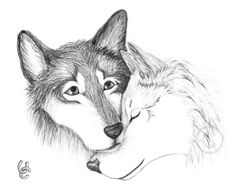 Wolves In Love by Tigerherz on deviantART Cute wolf drawings Wolf love Wolf drawing