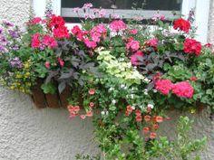 Window Garden \ Window Boxes | Garden at the Window
