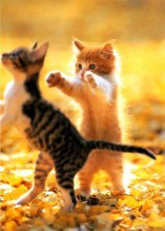 Sorprese feline