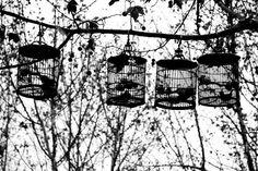 Correio da Júlia Paixão: La jaula se ha vuelto pájaro y ha devorado mis esp...