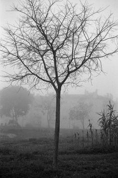 Árvore - O Meu Mundo Pela Lente