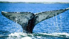 Bash for Behemoths: Whalefest Monterey.