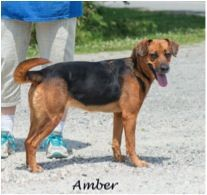Amber was adopted!