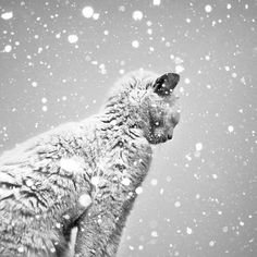 Black and White Photography by Benoit Courti