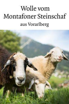 """Montafoner Steinschafe gelten als besonders anspruchslos, sind dabei zäh und von freundlichem Wesen. Aus der robusten Wolle werden allerlei Produkte hergestellt, von Hauspantoffeln bis zum Kinderkissen """"Montilämmle"""".  #steinschaf #wolle #souvenir #meinmontafon #visitvorarlberg #myvorarlberg Freundlich, Lamb, Animals, Sheep, Wool, Products, Stones, Animales, Animaux"""