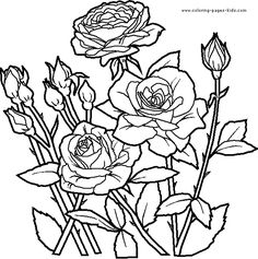 Roses Flowers coloring pages, color plate, coloring sheet,printable coloring picture