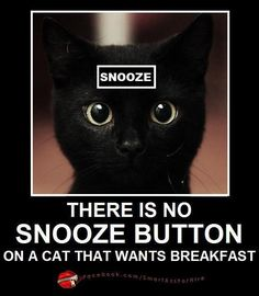 There is NO Snooze Button on a Cat That Wants Breakfast ....  And I Know This ALL to Well :-)