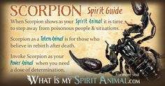 The most in-depth Scorpion Symbolism & Meaning! Scorpion as a Spirit, Totem, & Power Animal. Scorpion in Celtic & Native American Symbols & Scorpion Dreams!