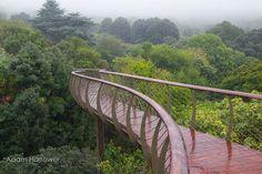El Boomslang: Un puente colgante en Ciudad del Cabo que te permite caminar sobre los árboles - RUTA 33