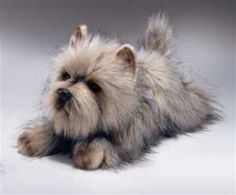 Cute Doggy - doesnt make a mess on your carpet