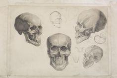 Anatomy, Heath,art