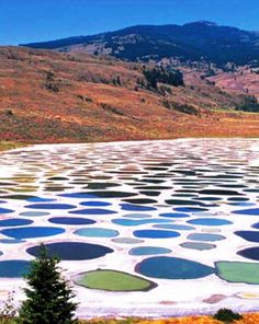 Spotted Lake is a saline endorheic alkali lake located northwest of Osoyoos in British Columbia in Canada. It is located near the city of Osoyoos, beside Highway Places Around The World, The Places Youll Go, Places To See, Around The Worlds, Beautiful World, Beautiful Places, Photos Voyages, Canada Travel, Natural Wonders