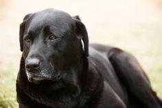 Tinklers dog. Pokolbin, Hunter Valley, NSW