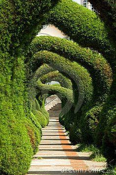 A dream or a nightmare? I feel a little like Alice in Wonderland...