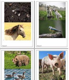 Gratis Download: Quizspiel Vögel erraten. Komplettes Ratespiel mit 75 Tierbildern, für fast alle Altersklasse. Kostenlos herunterladen und losspielen. Viel Spaß!