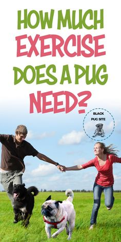 How much exercise does a Pug need? Is it possible to overexercise them? Find out everything you need to know about providing them the proper. Pug Health Problems, Adult Pug, Pug Facts, Old Pug, Black Pug Puppies, Fawn Pug, Fawn Colour, Baby Pugs, Different Dogs