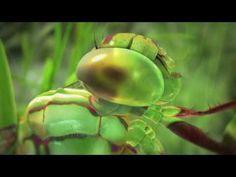 ▶ The Fibonacci Sequence - YouTube