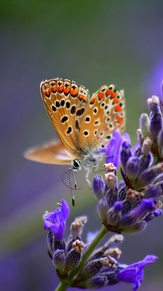 ARE you in search for different wallpapers for your desktop & wanna wallpaper that makes your day .WHAT can be better than beautiful colorful butterfly wallpapers that look amazing to … Butterfly Flowers, Beautiful Butterflies, Beautiful Flowers, Beautiful Bugs, Butterfly Wings, Cute Best Friend Tattoos, 2560x1440 Wallpaper, Hd Phone Wallpapers, Hd Wallpaper
