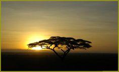 10 Days Meru National Park, Samburu, Lake Nakuru, Lake Baringo, Lake Naivasha.