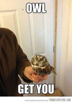 Vengeful Owl…