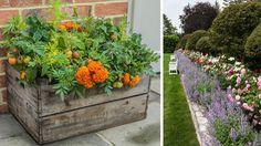 Správne kombinácie zaručia lepšiu úrodu či krajšie kvety Container Gardening, Flower Power, Flowers, Plants, House, Home, Plant, Container Garden, Royal Icing Flowers