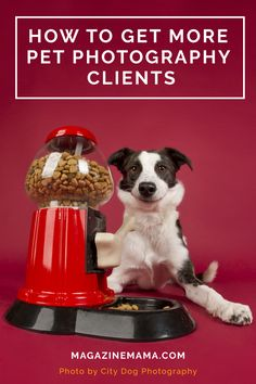 Want to grow your pet photography business?  Here are some great ideas to follow! http://www.magazinemama.com/blogs/editors-blog/16739128-how-to-get-more-pet-photography-clients