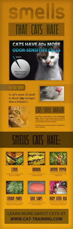 Smells That Cats Hate. Love this website!!!!!!!