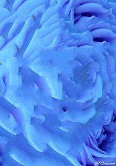 SJ Cummings : 4rd Floor - Coral Aurora, $1888 Science Art, Aurora, Coral, Paintings, Flooring, Rose, Artwork, Flowers, Plants