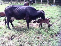 Nacimiento de Carola