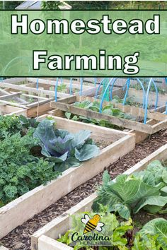 Are you interested in homestead farming? Homesteading can be done on a small scale. You don& need a lot of land to begin providing food and extra income. Hydroponic Gardening, Hydroponics, Organic Gardening, Aquaponics System, Urban Gardening, Indoor Gardening, Container Gardening, Vegetable Farming, Small Vegetable Gardens