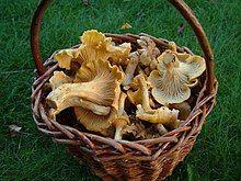 Liška obecná (houba) – Wikipedie