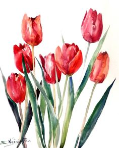 Red Tulips original watercolor painting 17 X 14 in by ORIGINALONLY, $54.00