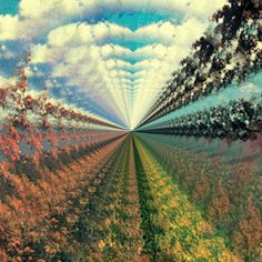 gif trippy drugs weed lsd acid psychedelic nature gif dmt Stoners trippy nature Psychedelic Nature