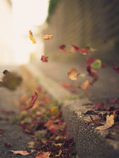 I love leaves falling... and then when they are on the ground I love to walk and hear the crunch.. It makes my soul sing....