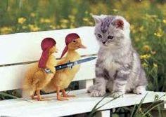 de  gatos  divertidos  o  graciosos