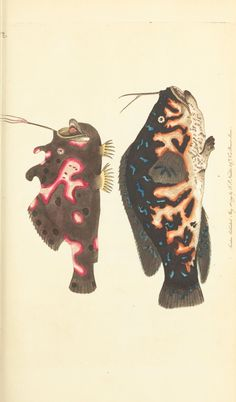 v.5 - The naturalist's miscellany, or Coloured figures of natural objects - Biodiversity Heritage Library