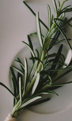 Did you know that the ancient Greeks believed that Rosemary was a magical plant with the ability to strengthen memory?  #NOWYOURECOOKING