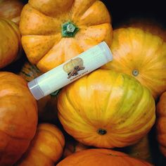 PSL!!! 🎃👄 Our Pumpkin Spice lip balm is 100% natural and handmade!  It contains vitamins A, B, D, E, and protein.  It helps increase collagen production, has anti-aging properties, and aids in the healing of cold sores. Available at ALoNaturals.com 🌿🎃🌾